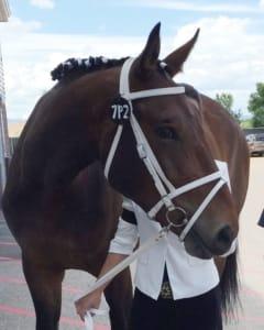 GOHA Horses - Peterbuilt